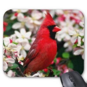 northern_cardinal_mouse_pad-r47ea04e607934bc9b086814175fa6575_x74vi_8byvr_324